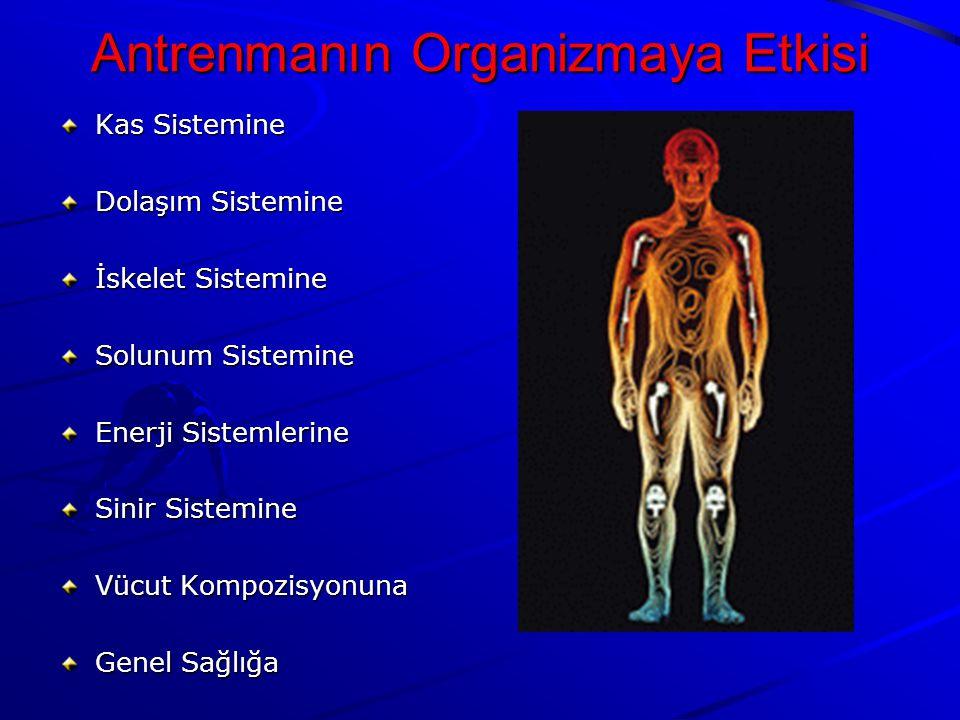 Kas Sistemine Dolaşım Sistemine İskelet Sistemine Solunum Sistemine Enerji Sistemlerine Sinir Sistemine Vücut Kompozisyonuna Genel Sağlığa