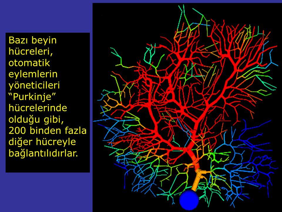 Beynimiz, her biri ortalama binlerce diğer hücreyle ilişkili olan, 100 milyar beyin hücresi ihtiva eder. Saman yolunda ki yıldızlar kadar. Her saniye