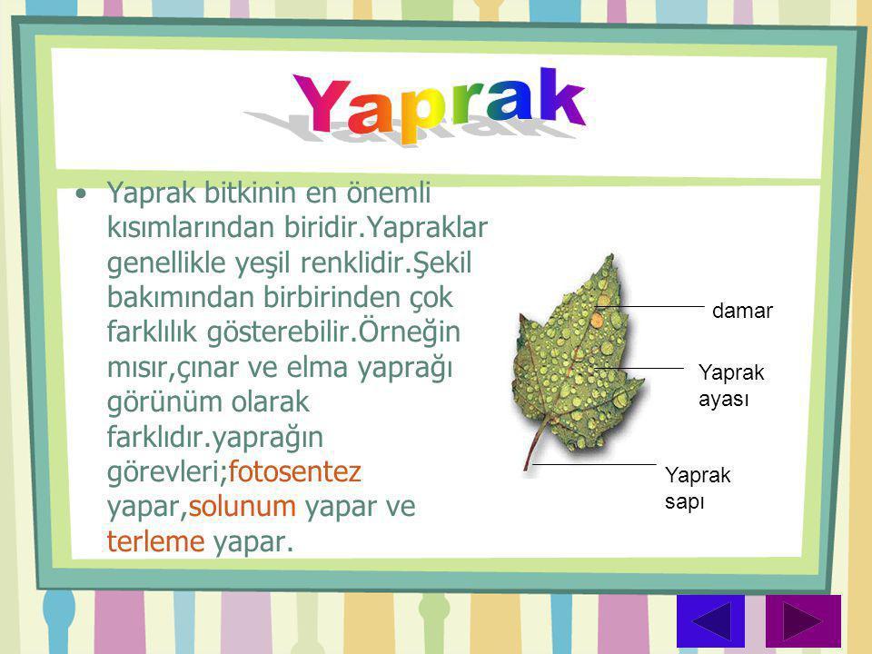 •Yaprak bitkinin en önemli kısımlarından biridir.Yapraklar genellikle yeşil renklidir.Şekil bakımından birbirinden çok farklılık gösterebilir.Örneğin