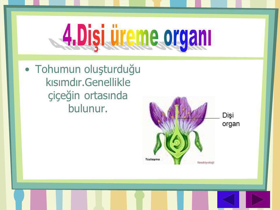 •Tohumun oluşturduğu kısımdır.Genellikle çiçeğin ortasında bulunur. Dişi organ