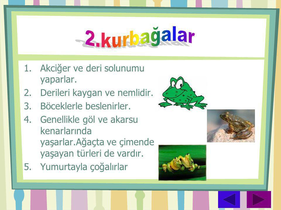 1.Akciğer ve deri solunumu yaparlar. 2.Derileri kaygan ve nemlidir. 3.Böceklerle beslenirler. 4.Genellikle göl ve akarsu kenarlarında yaşarlar.Ağaçta