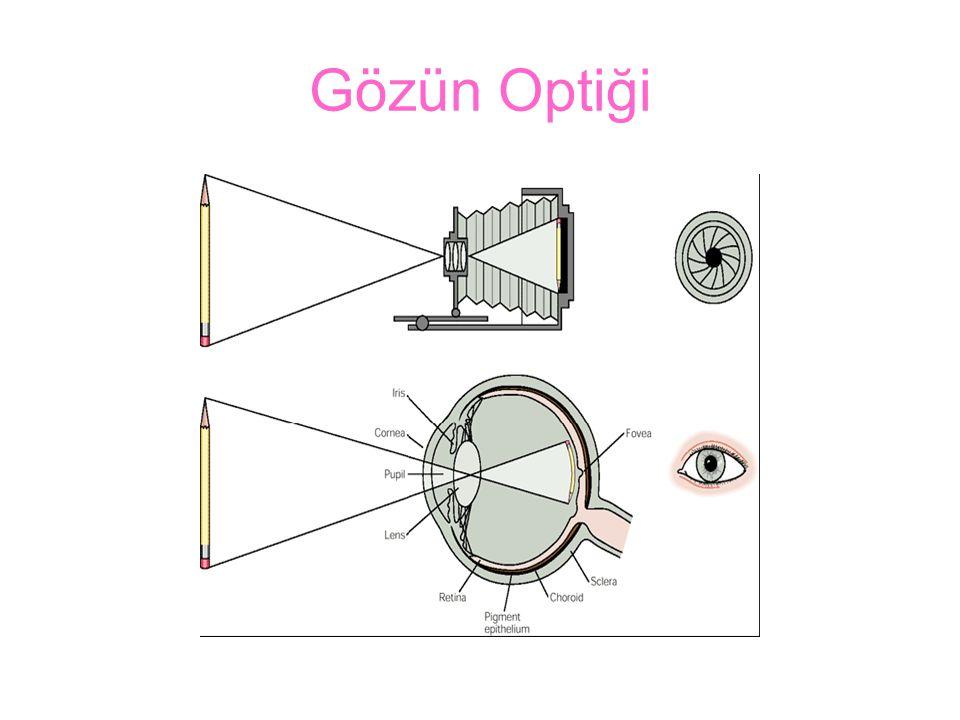 Gözün Optiği