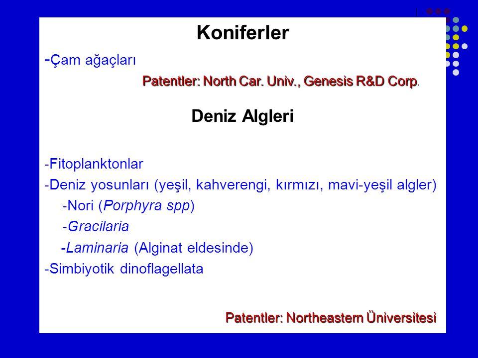 Koniferler - Çam ağaçları Deniz Algleri -Fitoplanktonlar -Deniz yosunları (yeşil, kahverengi, kırmızı, mavi-yeşil algler) -Nori (Porphyra spp) -Gracilaria -Laminaria (Alginat eldesinde) -Simbiyotik dinoflagellata Patentler: Northeastern Üniversitesi Patentler: North Car.