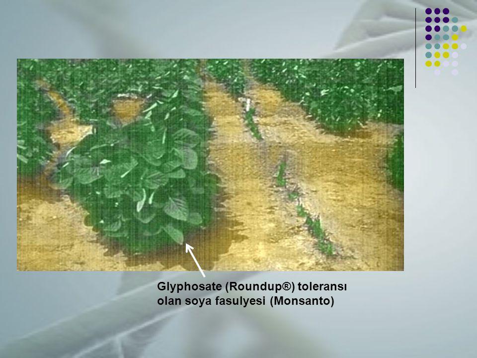 Glyphosate (Roundup®) toleransı olan soya fasulyesi (Monsanto)