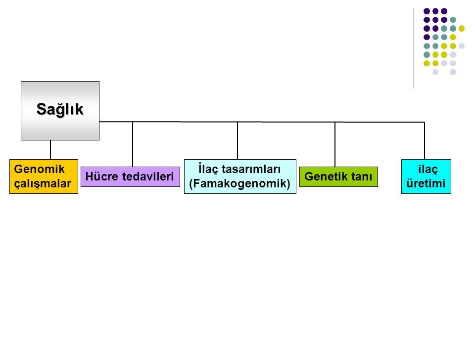 Sağlık Genomik çalışmalar Hücre tedavileri İlaç tasarımları (Famakogenomik) ilaç üretimi Genetik tanı