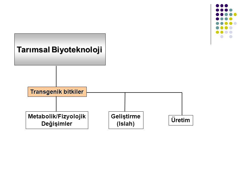 Tarımsal Biyoteknoloji Transgenik bitkiler Metabolik/Fizyolojik Değişimler Geliştirme (Islah) Üretim