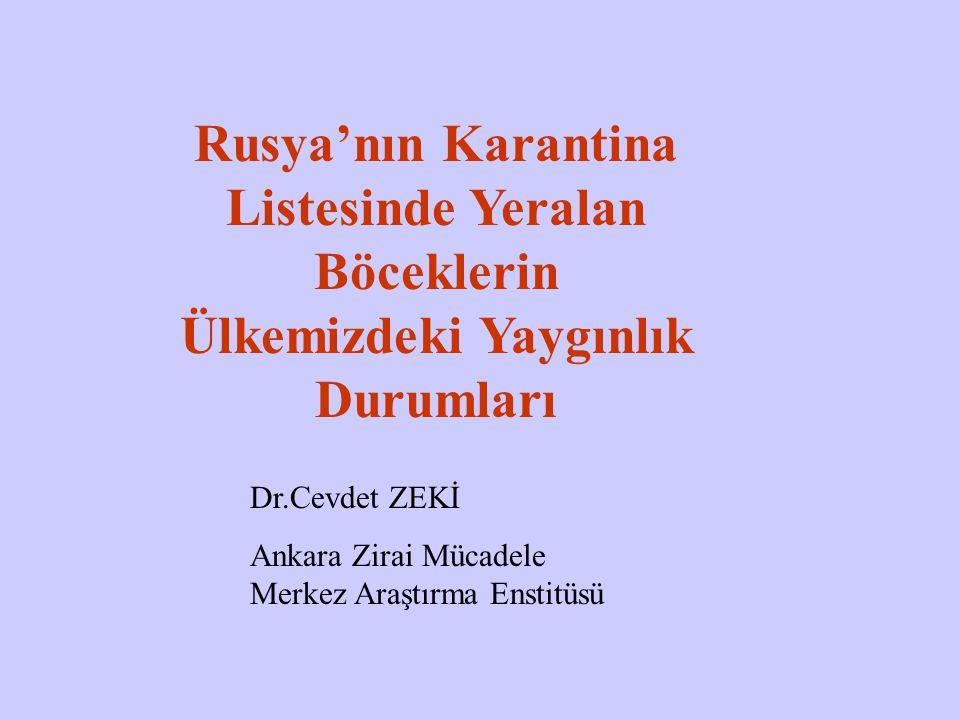 Anoplophora glabripennis Türkiye: Yok Coleoptera: Cerambycidae Rusya: A l listesinde Ergin çıkış deliği Erginin kabukta beslenerek yaptığı zarar