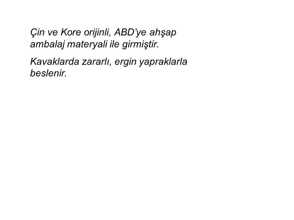 Ceratitis capitata Akdeniz meyvesineği Diptera:Tephritidae Türkiye: EK l/B listesinde Rusya: A l listesinde Şeftalideki zararı