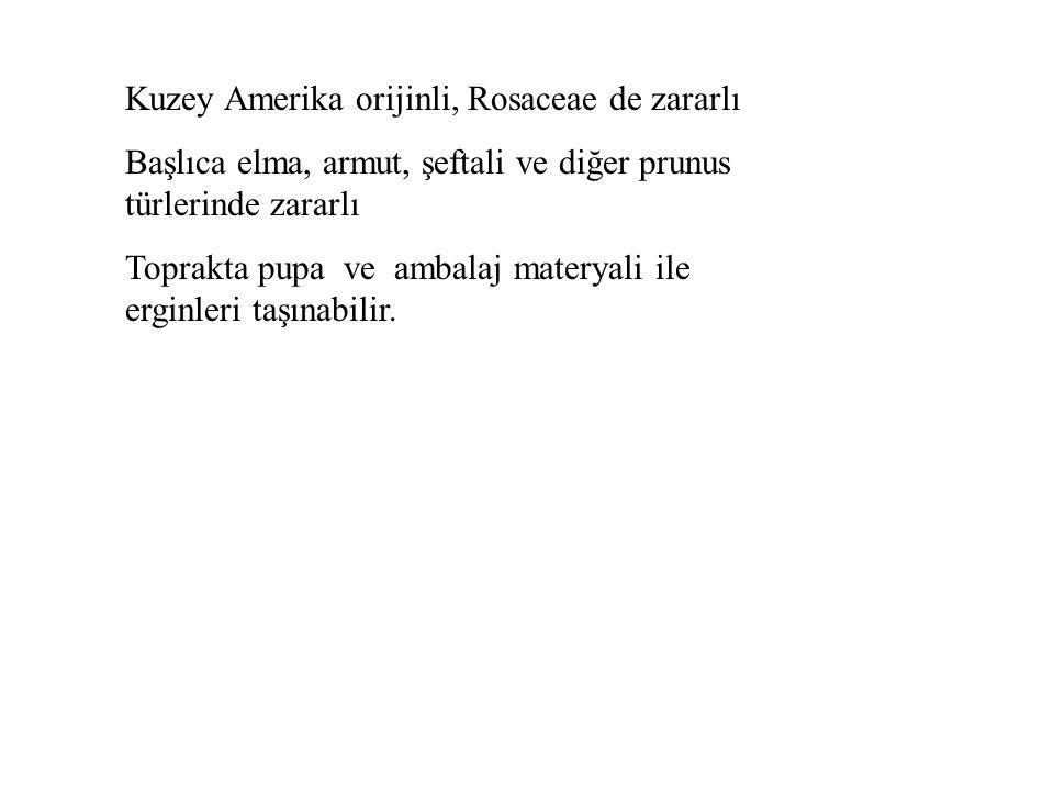 Diabrotica virgifera, Mısır Dip Kurdu Coleoptera: Chrysomelidae Türkiye: Yok, EK l/A listesinde Rusya: A l listesinde Konukçusu: Mısır, erginler mısır bitkisinde, larvaları da köklerde beslenir.