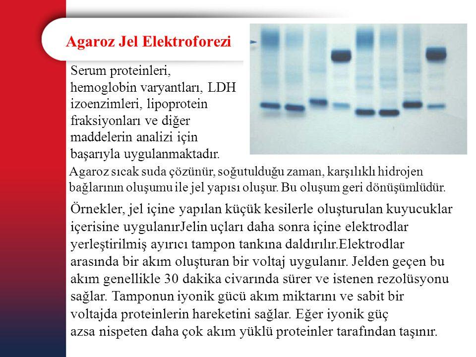 Agaroz Jel Elektroforezi Serum proteinleri, hemoglobin varyantları, LDH izoenzimleri, lipoprotein fraksiyonları ve diğer maddelerin analizi için başar