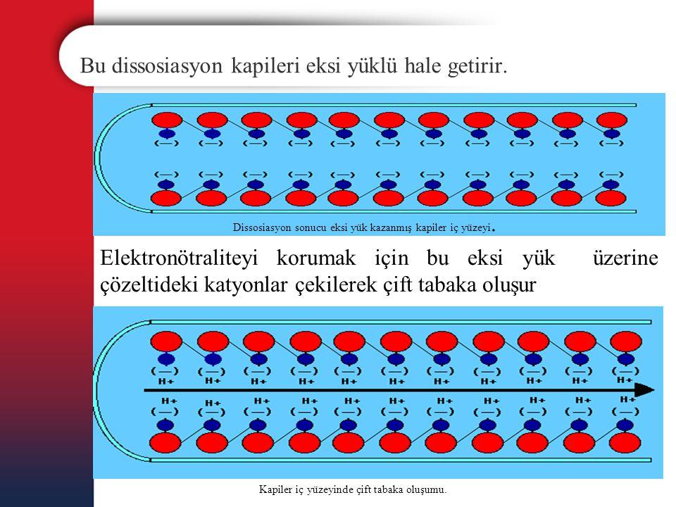 Bu dissosiasyon kapileri eksi yüklü hale getirir. Dissosiasyon sonucu eksi yük kazanmış kapiler iç yüzeyi. Elektronötraliteyi korumak için bu eksi yük