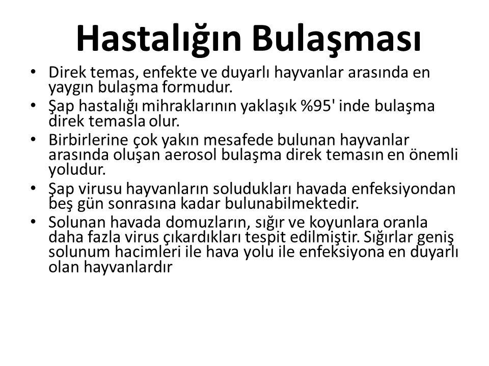 • Türkiye'de şap hastalığı mihraklarında yapılan incelemelerde, hastalığın en yaygın bulaşma yolunun genellikle hayvan hareketleri ve hayvan pazarlarının önemli rolü olduğu düşünülmektedir.