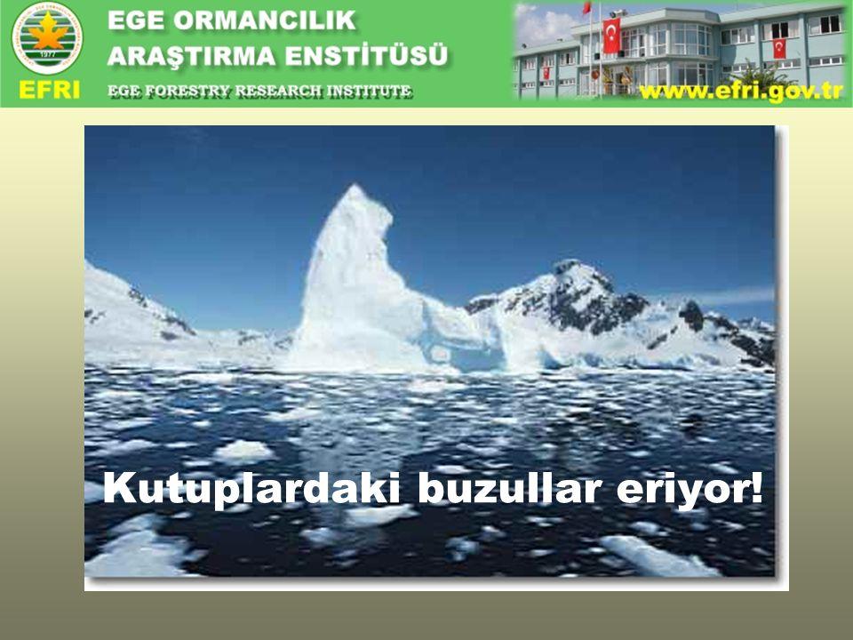 Kutuplardaki buzullar eriyor!