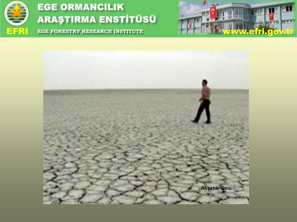• Atmosferdeki sera gazlarındaki (karbondioksit, metan vb.) artıştır.