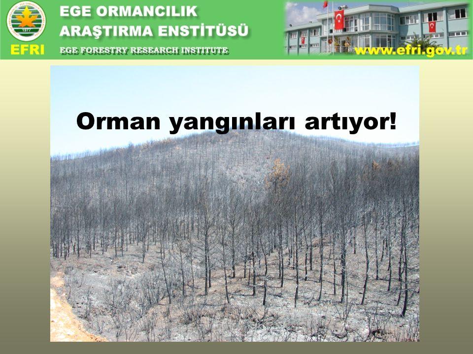 Orman yangınları artıyor!