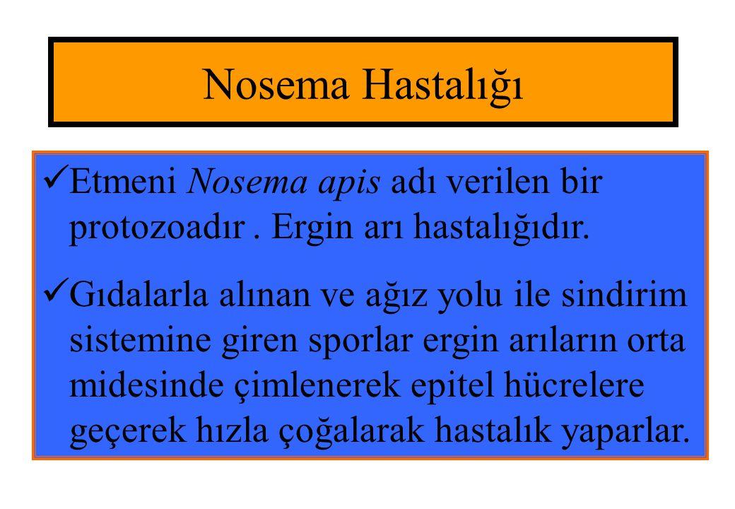 Nosema Hastalığı  Etmeni Nosema apis adı verilen bir protozoadır. Ergin arı hastalığıdır.  Gıdalarla alınan ve ağız yolu ile sindirim sistemine gire