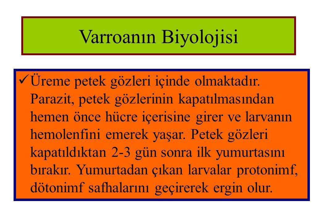 Varroanın Biyolojisi  Üreme petek gözleri içinde olmaktadır. Parazit, petek gözlerinin kapatılmasından hemen önce hücre içerisine girer ve larvanın h