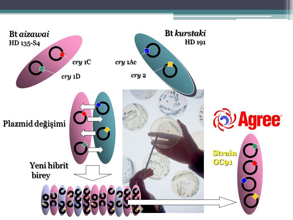 Bt kurstaki HD 191 Bt aizawai HD 135-S4 cry 1Ac cry 1C cry 1D cry 2 Plazmid değişimi Yeni hibrit birey birey Strain GC91