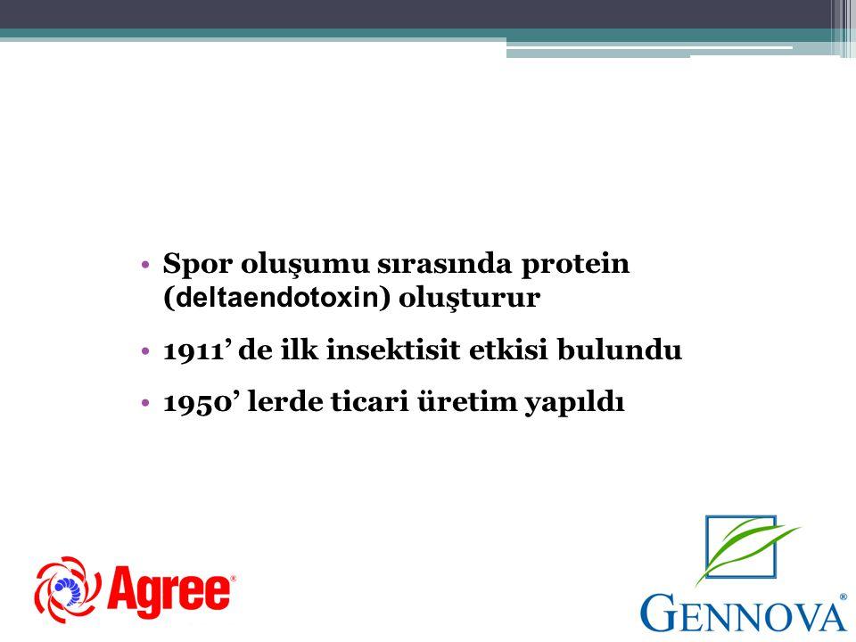 • Bakteri sporulasyonu anında böcekler tarafından yenildiğinde toksik maddelere dönüşen protein yapıda kristaller oluşturmaktadır.