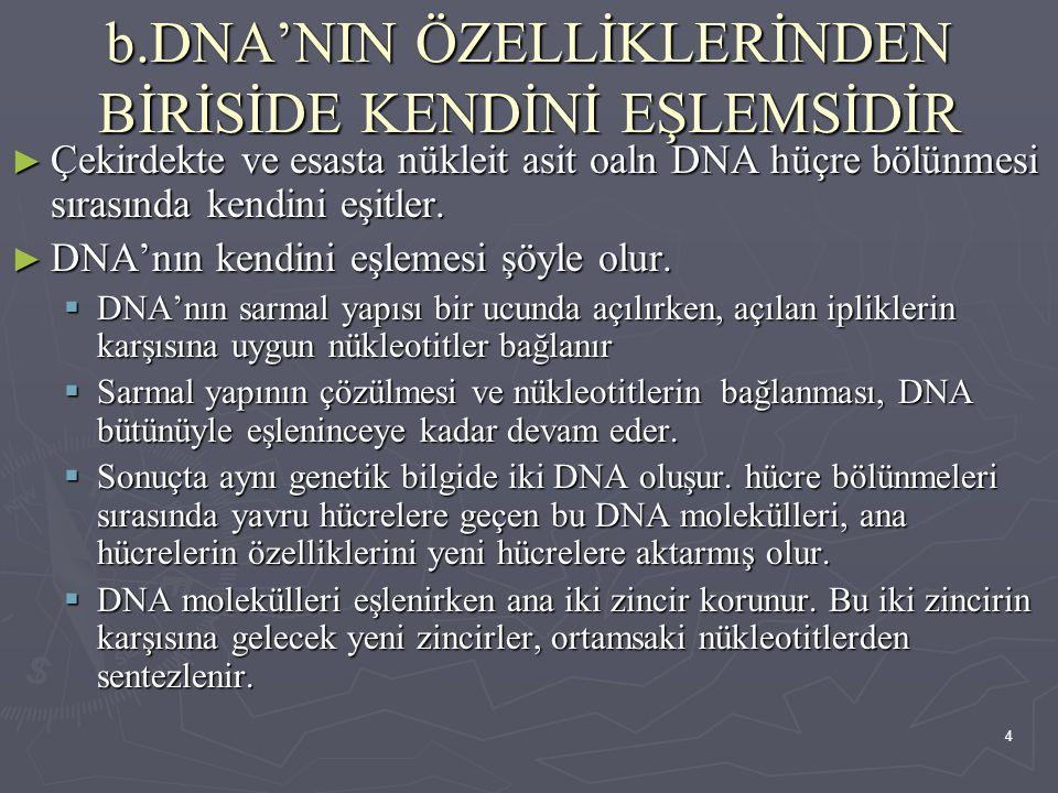 4 b.DNA'NIN ÖZELLİKLERİNDEN BİRİSİDE KENDİNİ EŞLEMSİDİR ► Çekirdekte ve esasta nükleit asit oaln DNA hüçre bölünmesi sırasında kendini eşitler. ► DNA'
