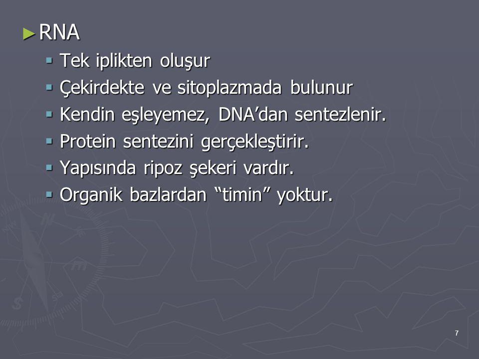7 ► RNA  Tek iplikten oluşur  Çekirdekte ve sitoplazmada bulunur  Kendin eşleyemez, DNA'dan sentezlenir.  Protein sentezini gerçekleştirir.  Yapı