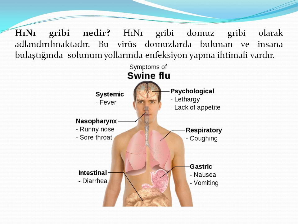 H1N1 gribi nedir? H1N1 gribi domuz gribi olarak adlandırılmaktadır. Bu virüs domuzlarda bulunan ve insana bulaştığında solunum yollarında enfeksiyon y