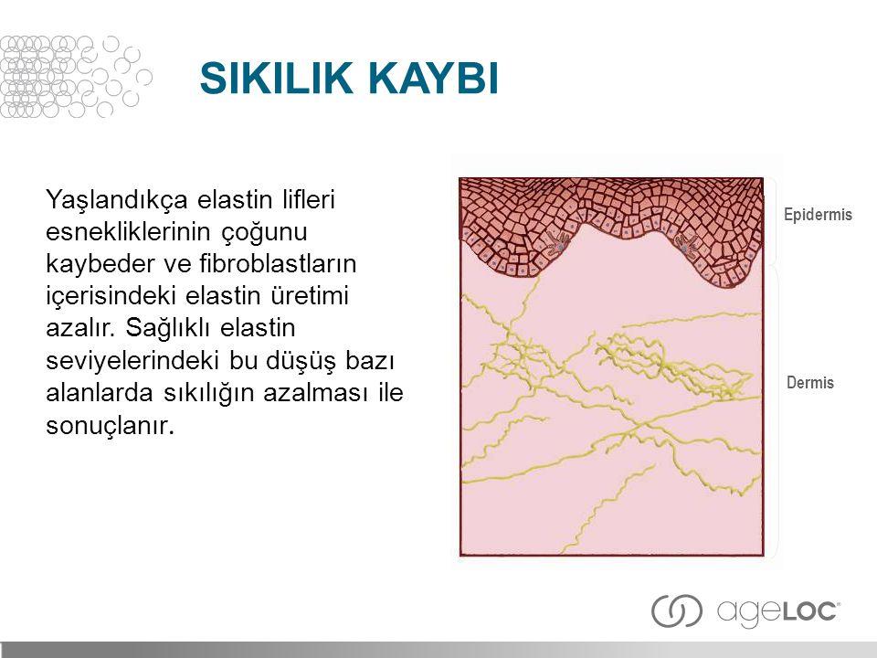 Yaşlandıkça elastin lifleri esnekliklerinin çoğunu kaybeder ve fibroblastların içerisindeki elastin üretimi azalır. Sağlıklı elastin seviyelerindeki b