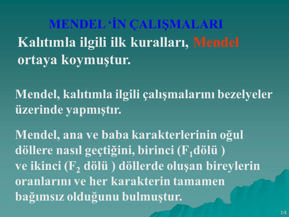 14 MENDEL 'İN ÇALIŞMALARI Kalıtımla ilgili ilk kuralları, Mendel ortaya koymuştur. Mendel, kalıtımla ilgili çalışmalarını bezelyeler üzerinde yapmıştı