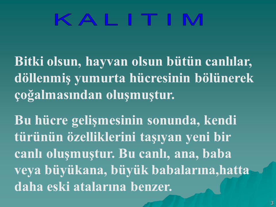 4 Bir canlının ana,baba veya daha büyük ana babalarından birine benzemesine; yani ana baba karakterlerinin yavrularına aktarılmasına KALITIM ( Genetik ) denir.