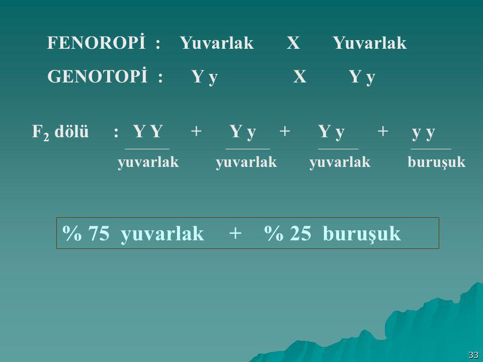 33 FENOROPİ : Yuvarlak X Yuvarlak GENOTOPİ : Y y X Y y F 2 dölü : Y Y + Y y + Y y + y y % 75 yuvarlak + % 25 buruşuk yuvarlak yuvarlak yuvarlak buruşu