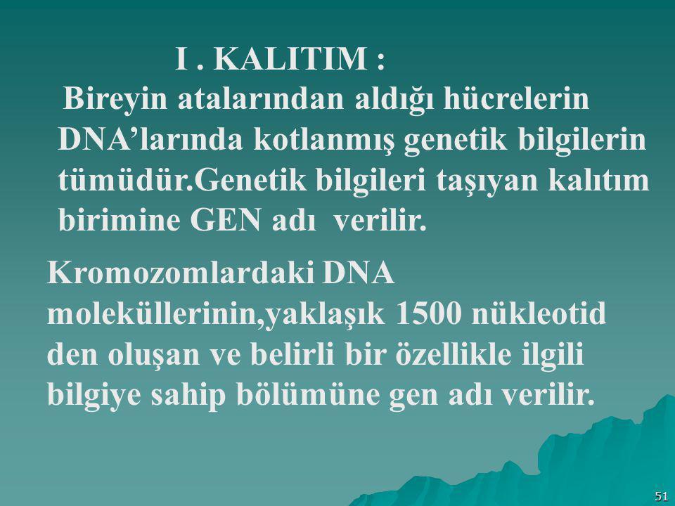51 I. KALITIM : Bireyin atalarından aldığı hücrelerin DNA'larında kotlanmış genetik bilgilerin tümüdür.Genetik bilgileri taşıyan kalıtım birimine GEN