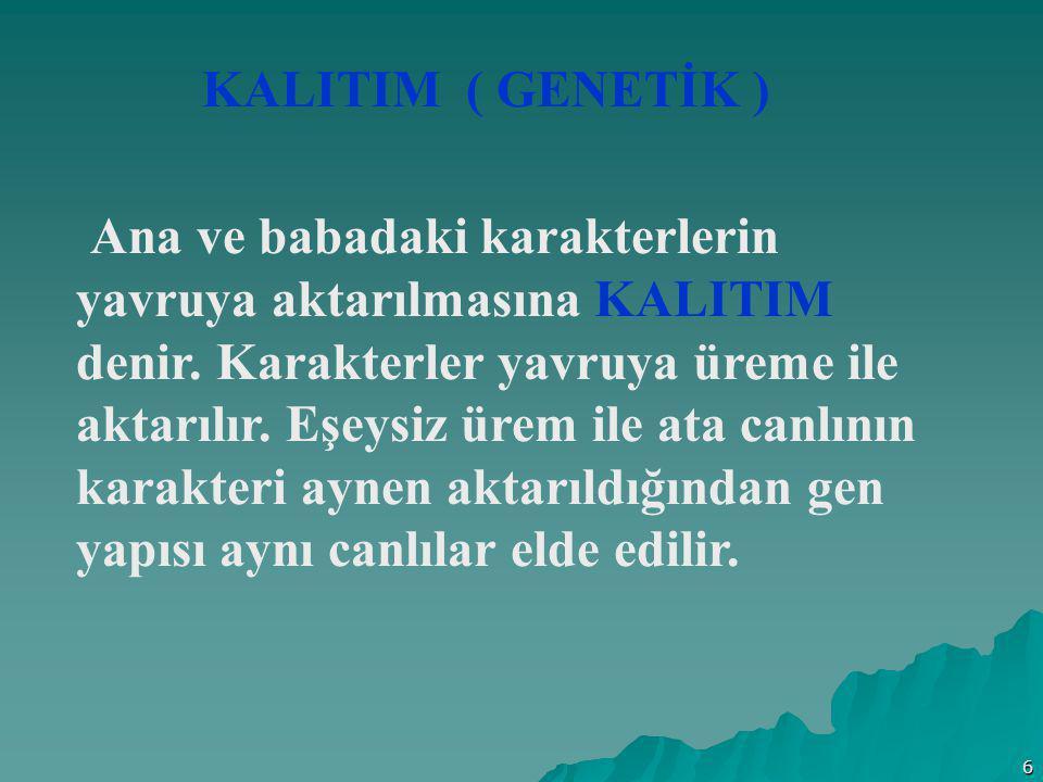 6 KALITIM ( GENETİK ) Ana ve babadaki karakterlerin yavruya aktarılmasına KALITIM denir. Karakterler yavruya üreme ile aktarılır. Eşeysiz ürem ile ata