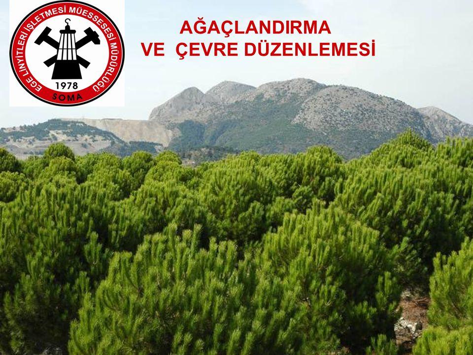 Bu alana; Yalancı Akasya: 130 bin adet Kızıl Çam: 13 bin adet Fıstık Çamı: 3 bin adet Toplam 146 bin adet ağaç dikilmiştir.