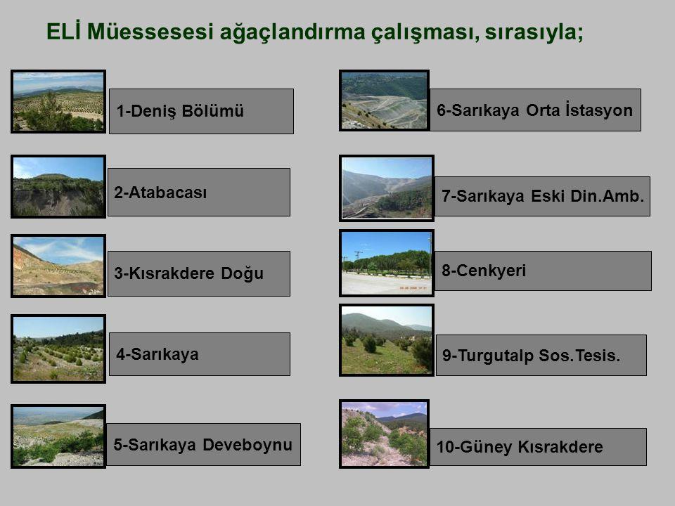 Sarıkaya dinamit deposu üzerinde, mülkiyeti ELİ ve Orman İdaresine ait 15 hektarlık alana 1997-1998'de kendi imkanlarımızla 26.000 adet fıstık çamı dikilmiştir.