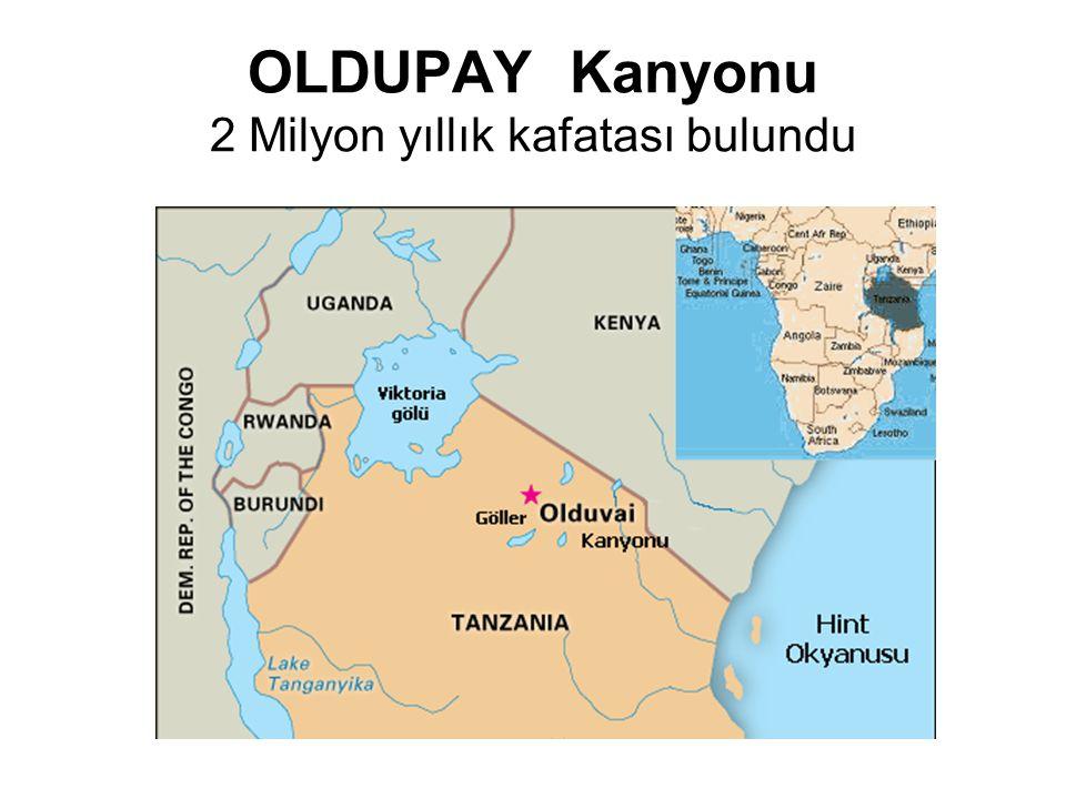 OLDUPAY Kanyonu 2 Milyon yıllık kafatası bulundu