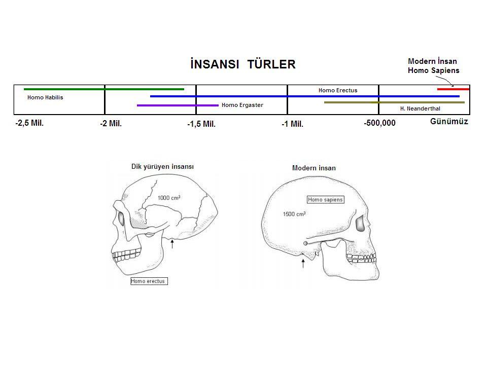 Göçlerin nedenleri •30,000 yıl önce buzul çağının başlaması ile ilk göçlerin oluşması.