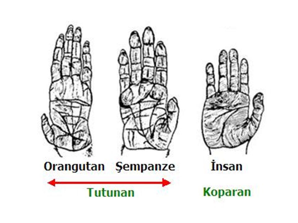 Ellerin Beyindeki önemi