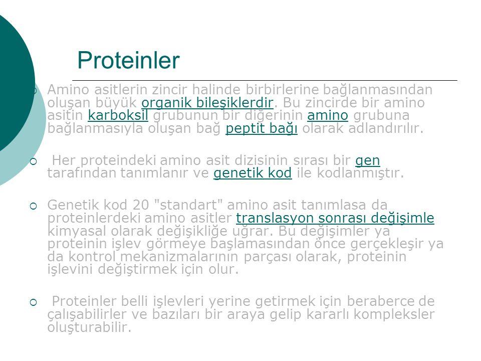 Proteinler  Amino asitlerin zincir halinde birbirlerine bağlanmasından oluşan büyük organik bileşiklerdir.