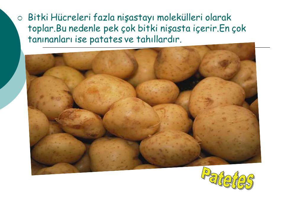  Bitki Hücreleri fazla nişastayı molekülleri olarak toplar.Bu nedenle pek çok bitki nişasta içerir.En çok tanınanları ise patates ve tahıllardır.