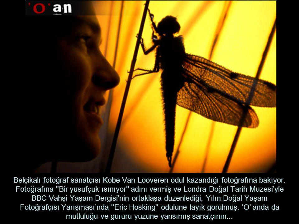 Belçikalı fotoğraf sanatçısı Kobe Van Looveren ödül kazandığı fotoğrafına bakıyor. Fotoğrafına ''Bir yusufçuk ısınıyor'' adını vermiş ve Londra Doğal