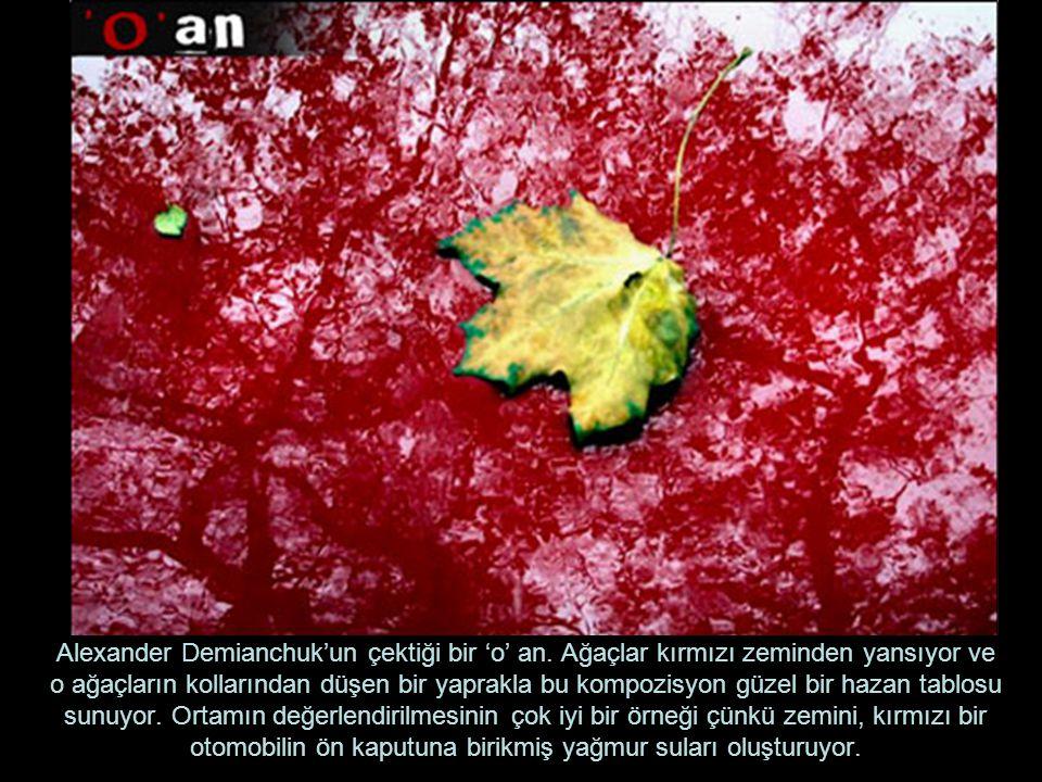 Alexander Demianchuk'un çektiği bir 'o' an. Ağaçlar kırmızı zeminden yansıyor ve o ağaçların kollarından düşen bir yaprakla bu kompozisyon güzel bir h