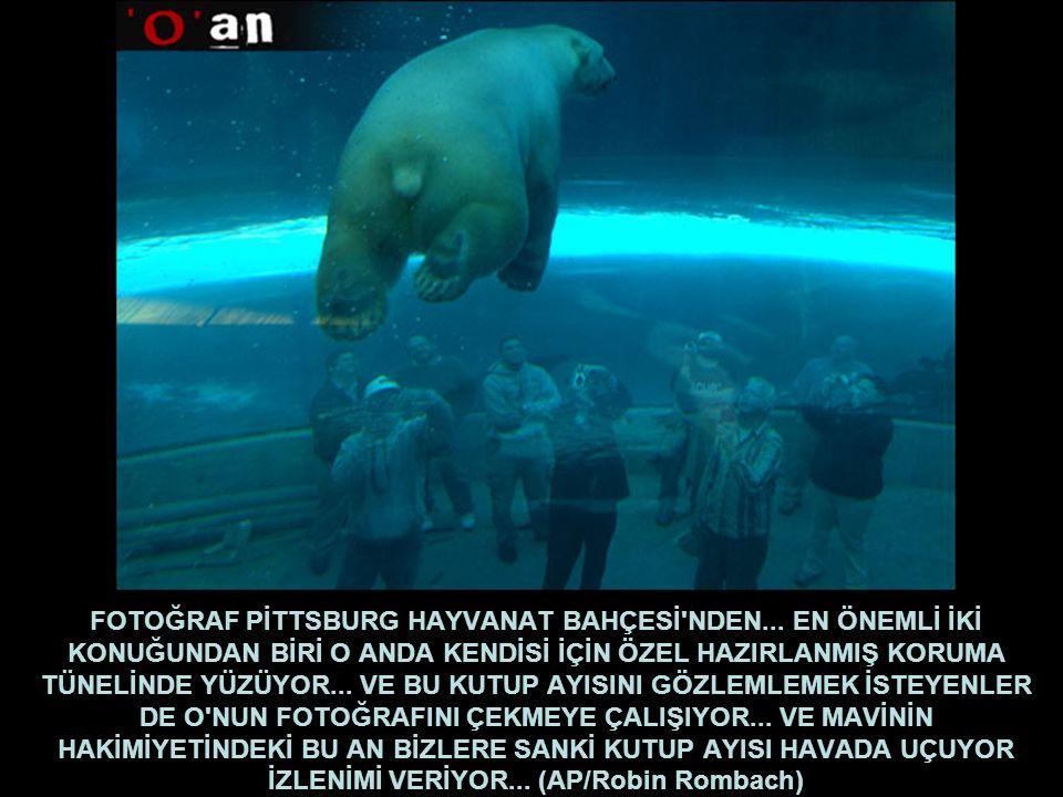 FOTOĞRAF PİTTSBURG HAYVANAT BAHÇESİ NDEN...