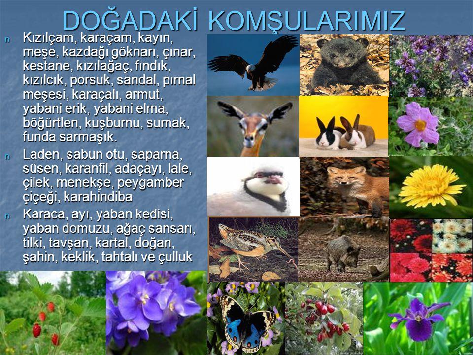 n Dört mevsim doğanın içinde, renkli ve sağlıklı bir yaşama merhaba deyin.