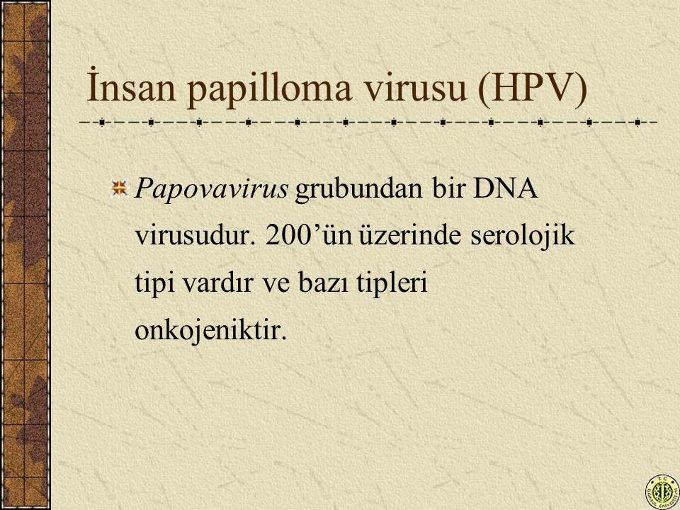 İnsan papilloma virusu (HPV) Papovavirus grubundan bir DNA virusudur. 200'ün üzerinde serolojik tipi vardır ve bazı tipleri onkojeniktir.