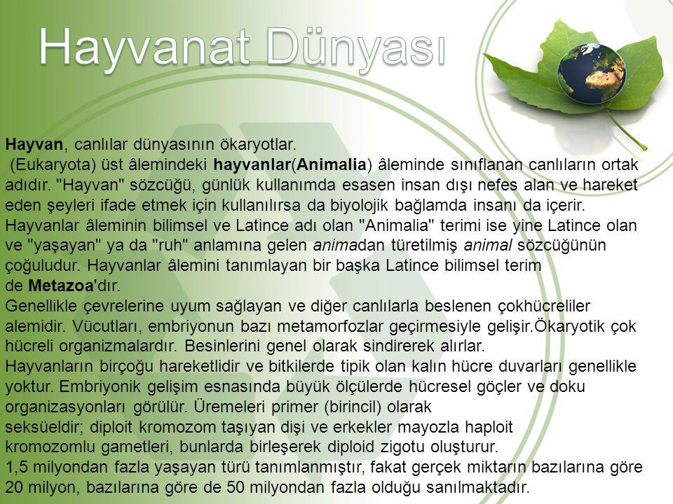 Hayvan, canlılar dünyasının ökaryotlar. (Eukaryota) üst âlemindeki hayvanlar(Animalia) âleminde sınıflanan canlıların ortak adıdır.