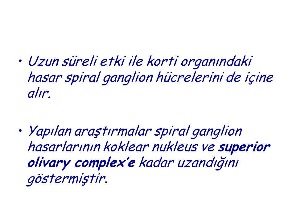 •Uzun süreli etki ile korti organındaki hasar spiral ganglion hücrelerini de içine alır. •Yapılan araştırmalar spiral ganglion hasarlarının koklear nu