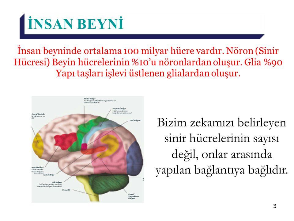 3 İNSAN BEYNİ İnsan beyninde ortalama 100 milyar hücre vardır. Nöron (Sinir Hücresi) Beyin hücrelerinin %10'u nöronlardan oluşur. Glia %90 Yapı taşlar