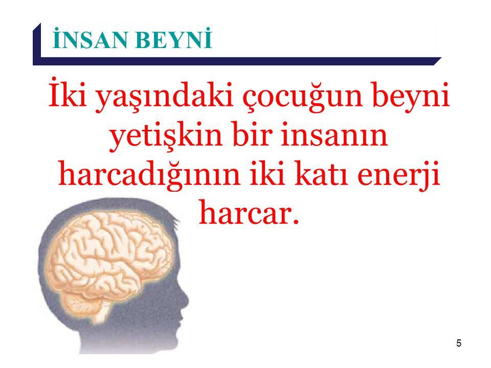 5 İNSAN BEYNİ İki yaşındaki çocuğun beyni yetişkin bir insanın harcadığının iki katı enerji harcar.