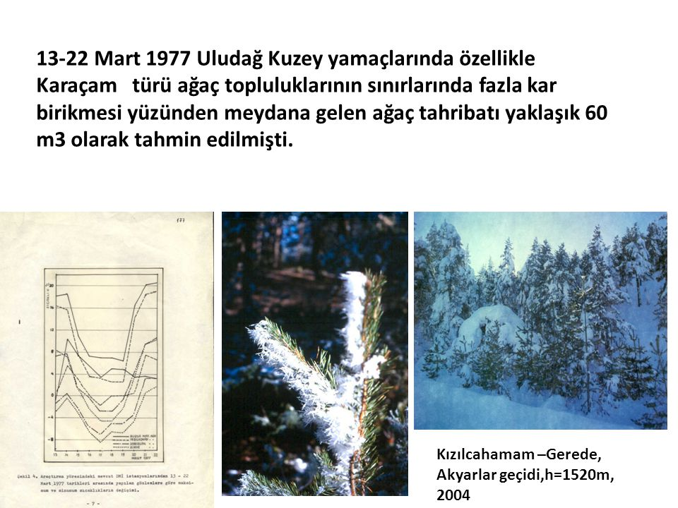 13-22 Mart 1977 Uludağ Kuzey yamaçlarında özellikle Karaçam türü ağaç topluluklarının sınırlarında fazla kar birikmesi yüzünden meydana gelen ağaç tah