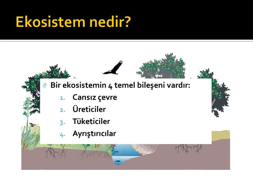 O Bir ekosistemin 4 temel bileşeni vardır: 1. Cansız çevre 2. Üreticiler 3. Tüketiciler 4. Ayrıştırıcılar
